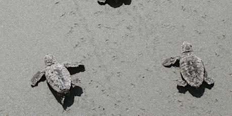 Ossabaw Loggerhead Turtles day trip: Sat. Aug 20 or Sun. Aug 21, 2022 tickets