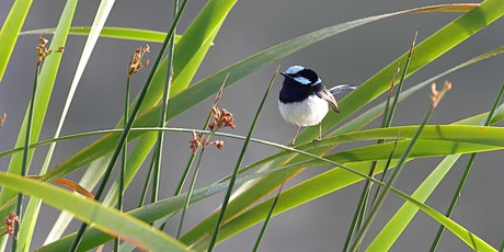 Aussie Backyard Bird Count - City of Logan. tickets
