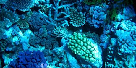 Women of the Great Barrier Reef tickets