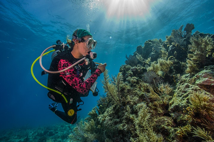 Save our Seas: how to secure the ocean's future image