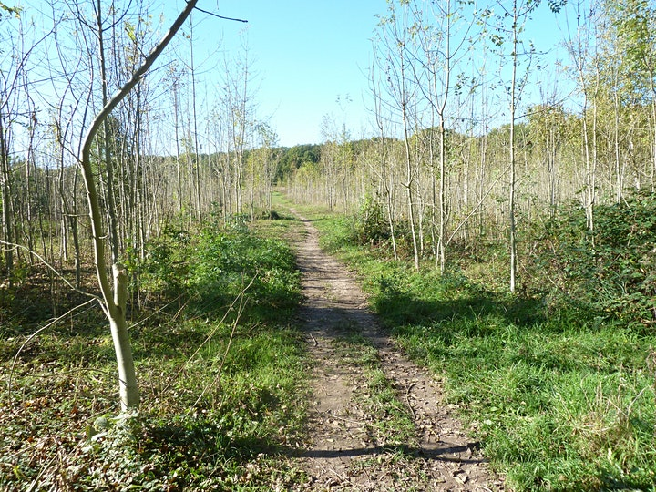 Rewilding Self-guided walk through regenerated woodland at Clayfield Copse image