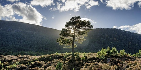 Cairngorms Forest Photography Workshop tickets