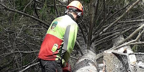 Presentazione del nuovo Albo regionale delle Imprese Forestali biglietti