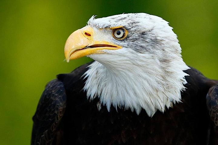 Let's talk: Tierfotografie: Bild
