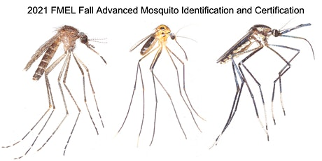 FMEL Fall Advanced Mosquito Identification and Certification tickets