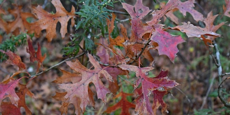 Guided Hike: Signs of Fall- Fountain Side tickets