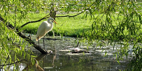 Birding at Kenilworth Aquatic Gardens tickets
