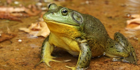 Fact or Fiction: Learning to Live with Bullfrogs tickets