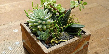 In Person!  Discover Succulents Class - Sun , Oct 3rd tickets