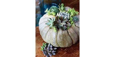 """Rocky Pond Winery, Woodinville - """"Succulent Pumpkin"""" tickets"""