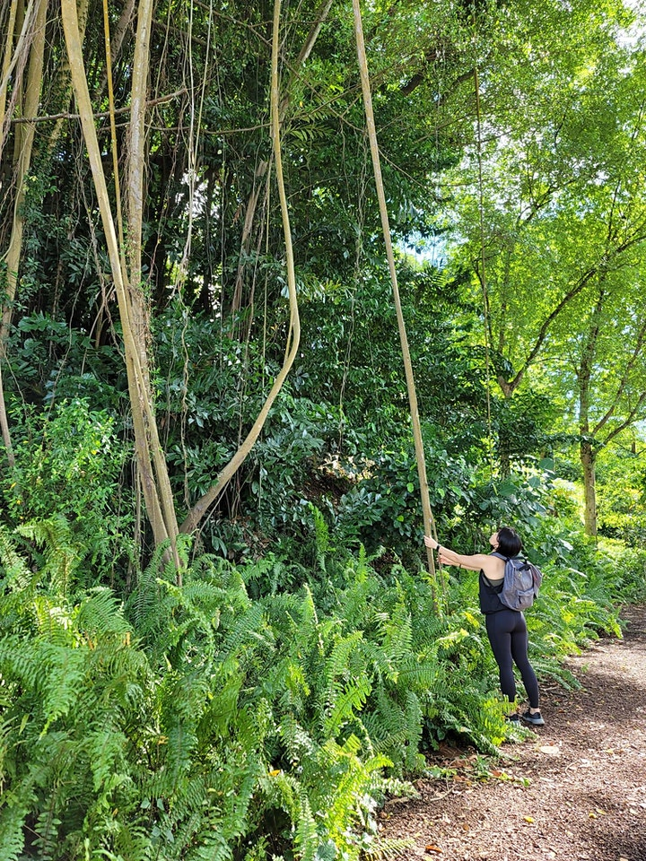 Forest Bathing & Mindful Walking in City's Nature image