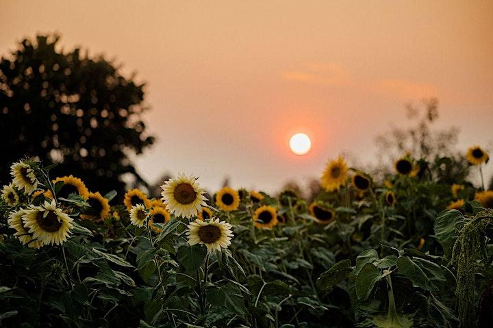 Autumn Abundance: learn how to create a loose, lush and elegant arrangement image