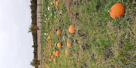 Pumpkin Picking 2021 South Ardbennie tickets