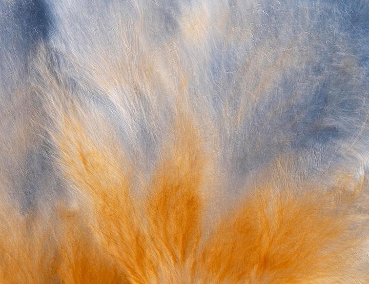 MYCOTA image