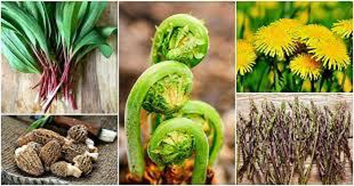 'An Introduction to the Powerful World of Plants' Sue-Marie, Farmers Wife image