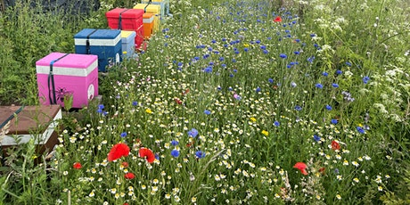 Exeter's Biodiversity Plan: Getting Involved tickets