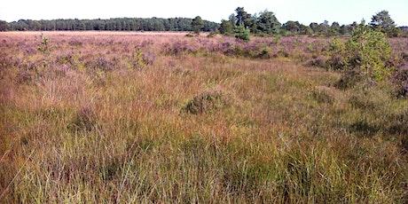 Heathland, Acid Grassland and Bogs - Vegetation Survey and Assessment 2022 tickets