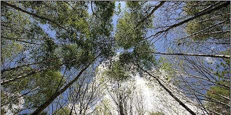 Wildlife Live Webinar - Time for Trees (ewc 2806) tickets