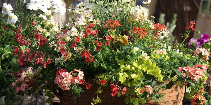 Second Summer Container  Workshop - create stunning summer colour image