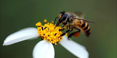 Visiter les ruches du CHU de Lille - SEDD 21 billets