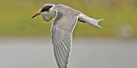 Autumn Fest 2021 - Bird Walk with Richard Tomlin. tickets