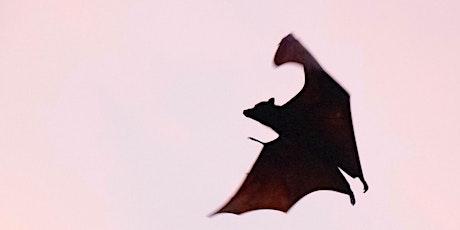 Climbers Run After Dark: Bats tickets