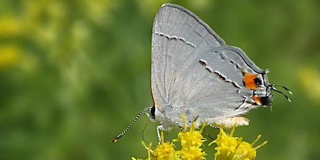 Fall in Bloom: An Exploration of Kellys Run Pollinator Park tickets