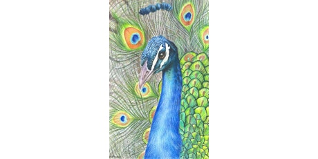 Art After Dinner Workshop: Colored Pencil Peacock tickets