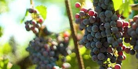 Grape Stomp at Historic Canoe Ridge tickets