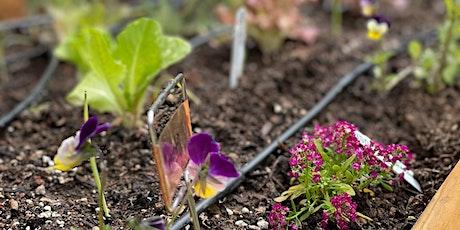 Grow Your Best Fall Salad Garden tickets
