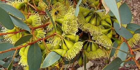 Evolution of the Eucalypt - A Guided Tour tickets