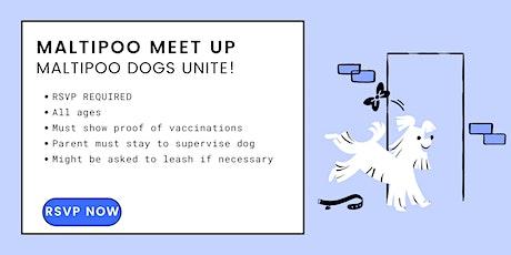 Maltipoo Meet Up: Saturday Socials at Dogdrop tickets