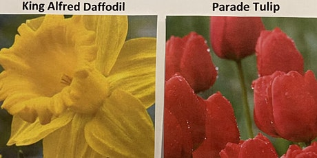 Daffodil and Tulip Bulb  Pre-purchase and Pickup tickets