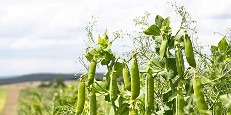 Seed Webinar Series: Fresh Peas | Semences & variétés adaptées : Pois Vert tickets