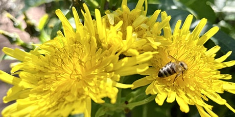 Discovering Pollen at Adelaide Botanic Garden - A Guided Tour tickets