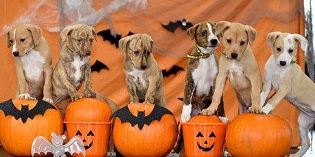 Puppy, Pumpkins & Yoga! tickets