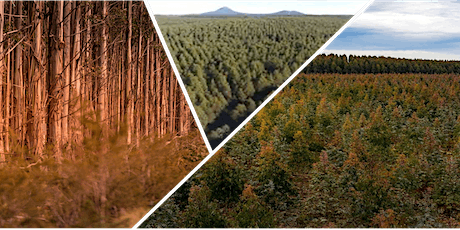 2021 Insights Breakfast Series: The Forest Products Industry tickets