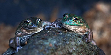 Reptile Encounters Wild Livestream tickets