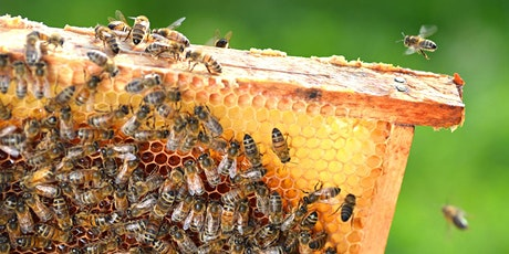 Backyard Honey online workshop tickets