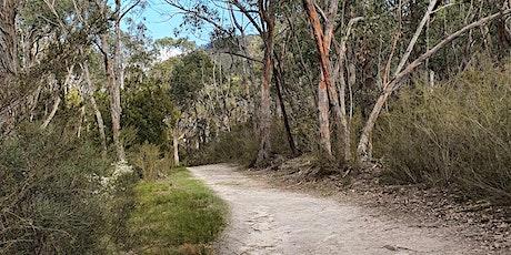 Immersive Adventure Walk in the Adelaide Hills tickets