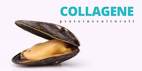 COLLAGENE - proteine culturali  #4 biglietti