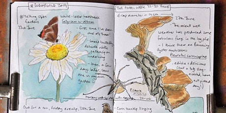 Nature Journaling with Sharon - 1st November tickets
