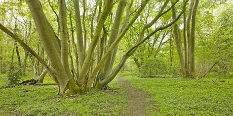 Discover the Magic of Wayland Wood Guided Walk tickets