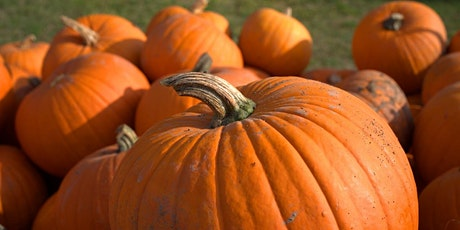 Wasing PYO Pumpkins & Woodland Trail tickets