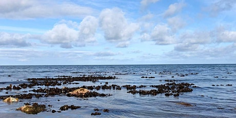 Coastal Foraging and Cooking - Foraging Workshop and Lunch at Conwy tickets