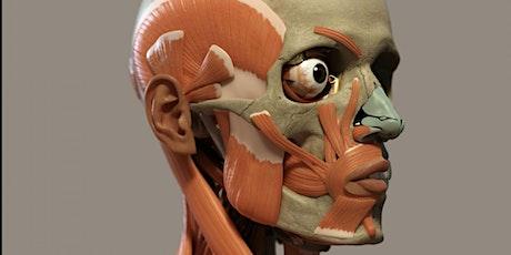 Cannula King® Facial Cadaver Lab - PROVIDENCE, RI tickets