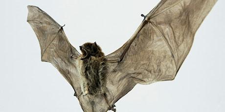 Dusk Bat Walk (Adult Event) Lloyd Park tickets