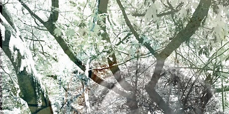StoryTown Corsham: If Trees Could Speak - Meetings with Trees tickets