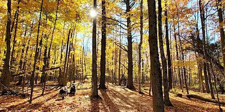A Pause Between Seasons -- Forest Wellness Walk tickets