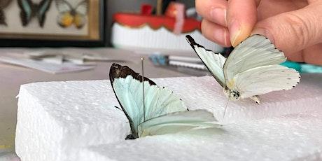 Butterfly Pinning Class tickets